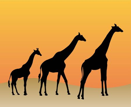 wildlife reserve: Collection of giraffes silhouette