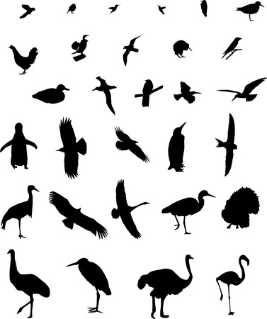 Birds collection silhouette Vector
