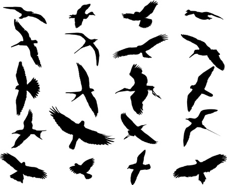 flying birds: Birds collection silhouette - vector