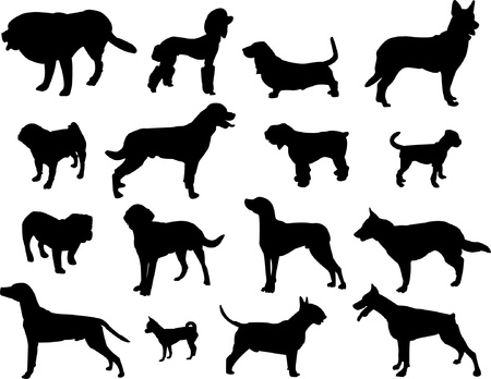 cocker: Dogs silhouette - vector Illustration