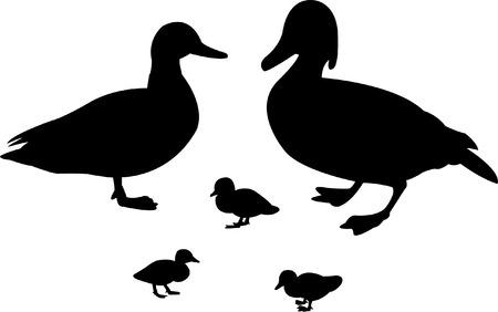 duck silhouette: duck family Illustration