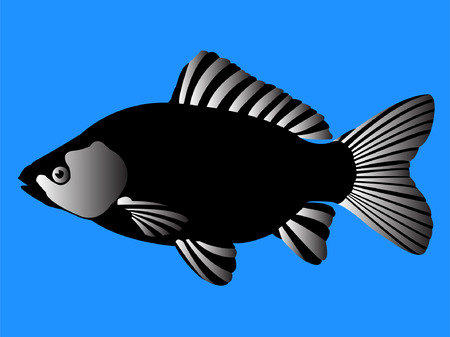 beautiful black fish - vector