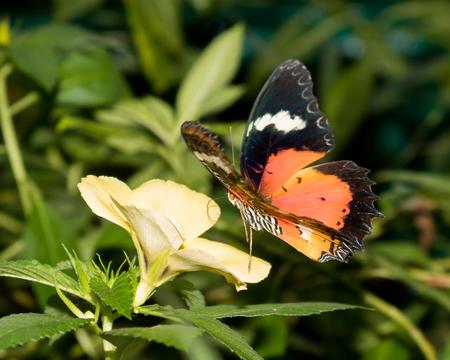 Dainty lacewing gently landing on a flower Reklamní fotografie