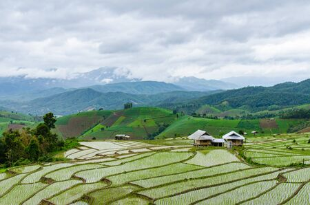 terraces: terraces of paddy field