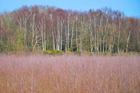 heathland: Heathland with trees Stock Photo