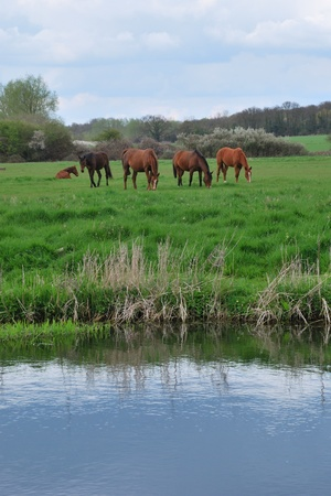Horses in field with river in foreground Stock Photo - 13222596