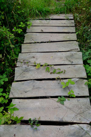 Wooden Pathway in forest photo