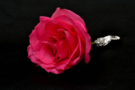 buttonhole: Rose ready for buttonhole Stock Photo