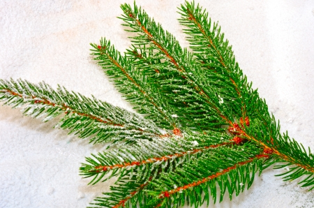 Branch of fir tree over snow Stock Photo