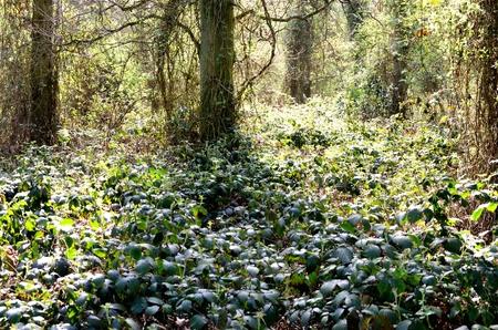undergrowth: Forest with undergrowth