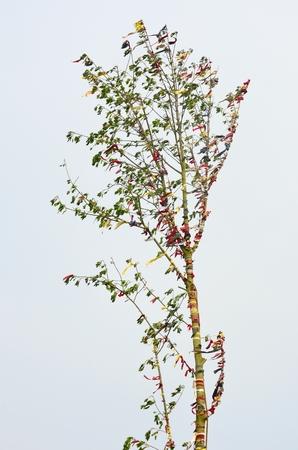 maypole: Maypole tree Stock Photo