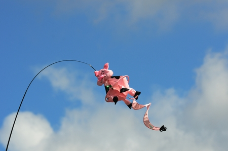 the novelty: Novelty pig kite flying