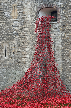 TOWER of  LONDON UK  Remembrance poppies flowing from window  at tower   16 September 2014