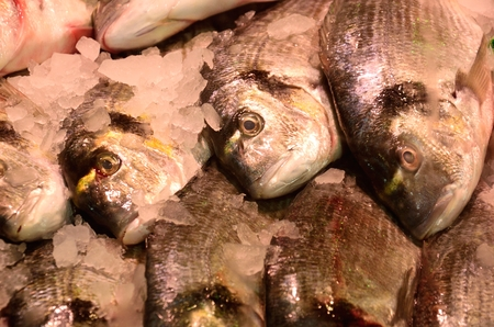 slab: Fish on Fishmongers slab