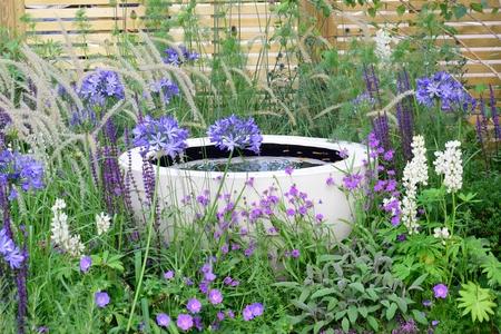 water garden: Water feature amongst purple flowers