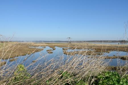 estuary: Suffolk Estuary in winter