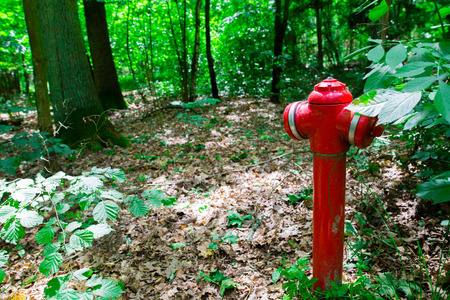 Fire protection of the forest Stock Photo