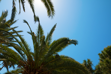Silhouettes of palm trees against the sky during a tropical day Stock Photo
