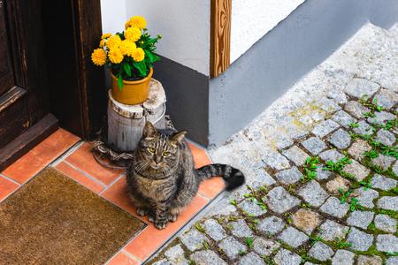 Nice cat waiting for host near the door 版權商用圖片