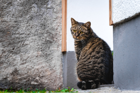 Lovely cat sitting on the ground waiting near the door