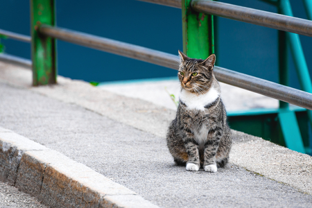 Cat sitting on the ground on city street