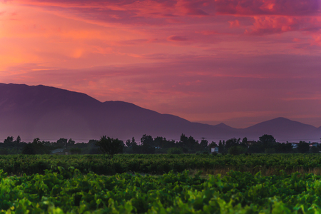 Colorful landscape with grape field day in mountains at sunset 写真素材