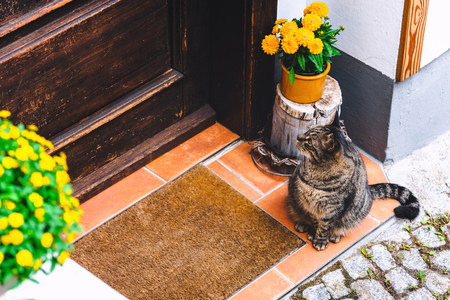 Cat sitting near the door of the house, waiting for host let him in