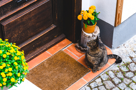 Nice cat sitting near the door of the house, waiting for owner let him in
