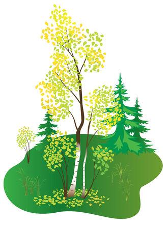 illustration with autumn birch Vector