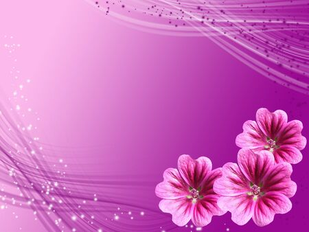 violet card with flowers hollyhock photo