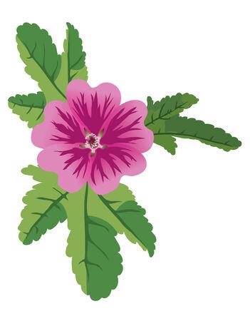 vector illustration of mauve flower malva  Illustration