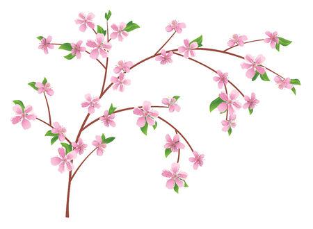 flor de durazno: rama de vector de melocot�n con flores flores
