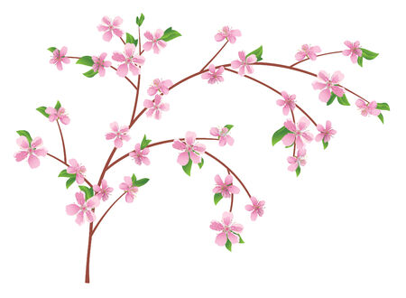 peach tree: vector branch of peach with blooming flowers