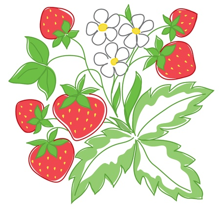 vector illustration of red strawberry