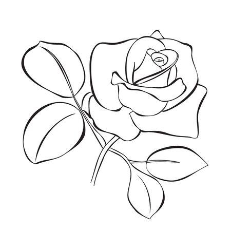 beautiful rose Stock Vector - 9449321