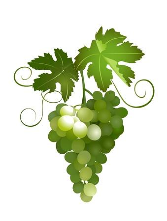 mellow: green grapes - vector illustration