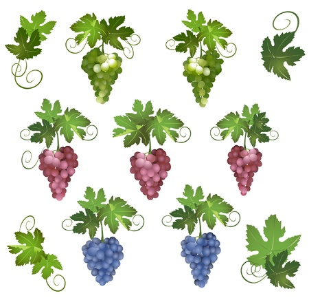 raceme: different grapes with green leaves Illustration