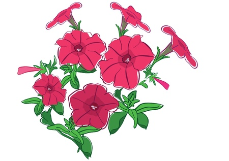 petunia: group of summer flowers - red petunia - vector