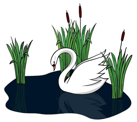 rietkraag: witte zwaan op de donkere meer - vector Stock Illustratie