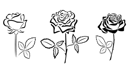 rose silhouette: black silhouettes of roses - vector Illustration