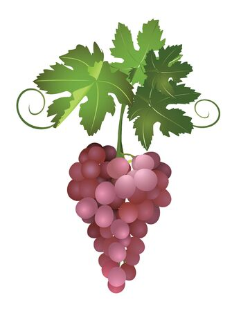 a bunch of brown grapes  Vector