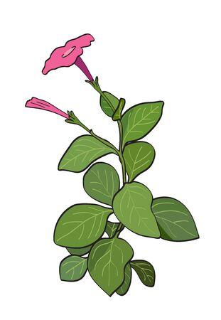 summer flower - red petunia - vector Illustration