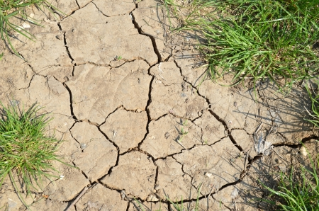 aridness: dried land and grass Stock Photo