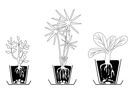 houseplants: set of houseplants - vector Illustration