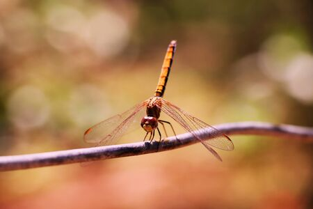 Dragonflies are jewels among insects, dragonflies represent good luck or prosperity. Stock fotó
