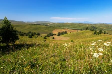 altay: field summer mountain russia altay