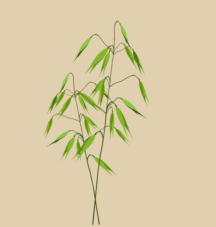 oat field: Oats