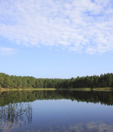 Nature scene - forest reflection in the water Stock Photo - 5330618
