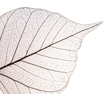 Dry leaf detail texture in front to light Stock Photo - 9674948
