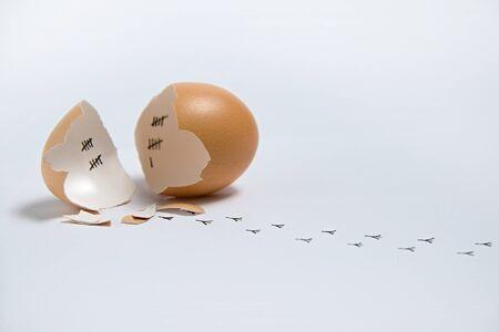 tojáshéj: Fogalma egy szökött fiatal csirke után számítva napon belül tojáshéj. Stock fotó
